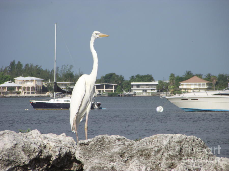 Boats Photograph - Standing Guard by Michelle Welles