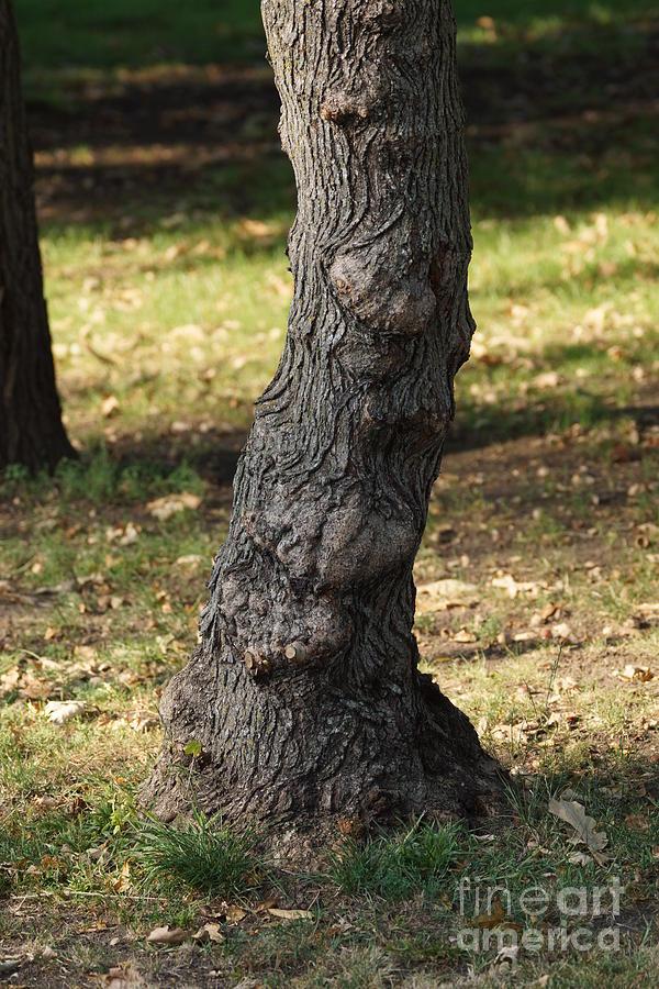 Tree Photograph - Standing Tall by Lori Tordsen