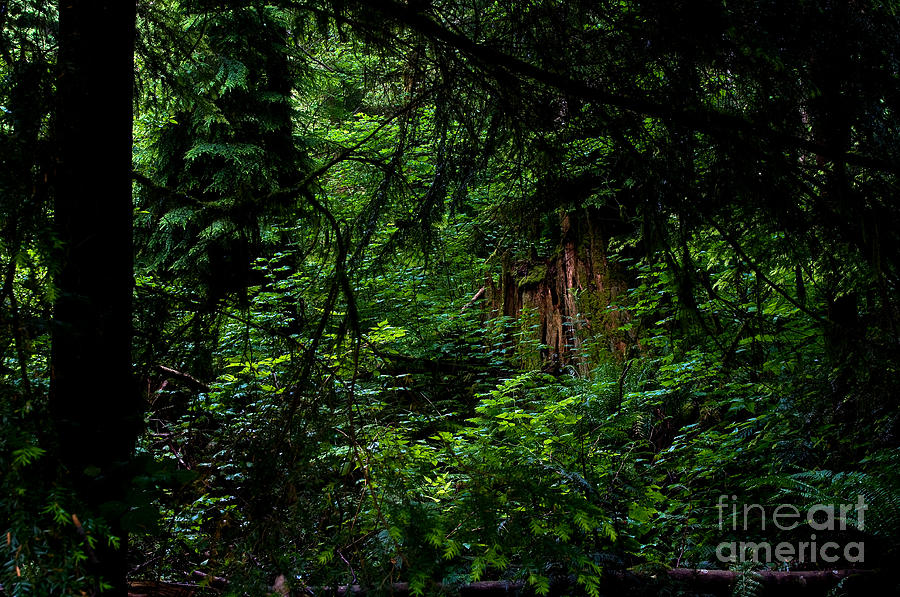 Stanley Park Photograph - Stanley Park Trees 3 by Terry Elniski