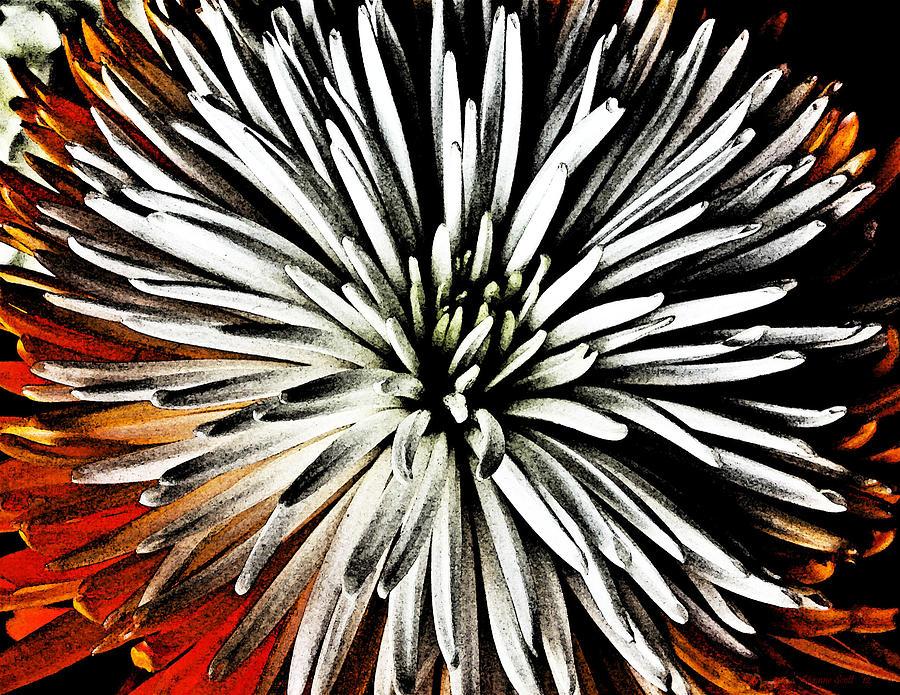 Flower Digital Art - Starburst by Yvonne Scott