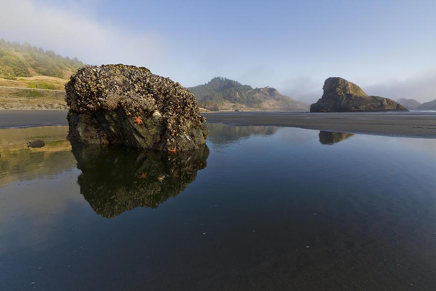 Fog Photograph - Starfish Beach by Debra and Dave Vanderlaan