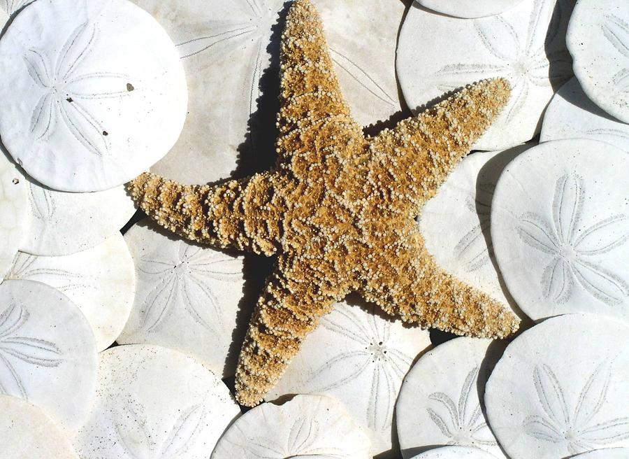 Starfish On Sand Dollars Photograph By Ron Larue