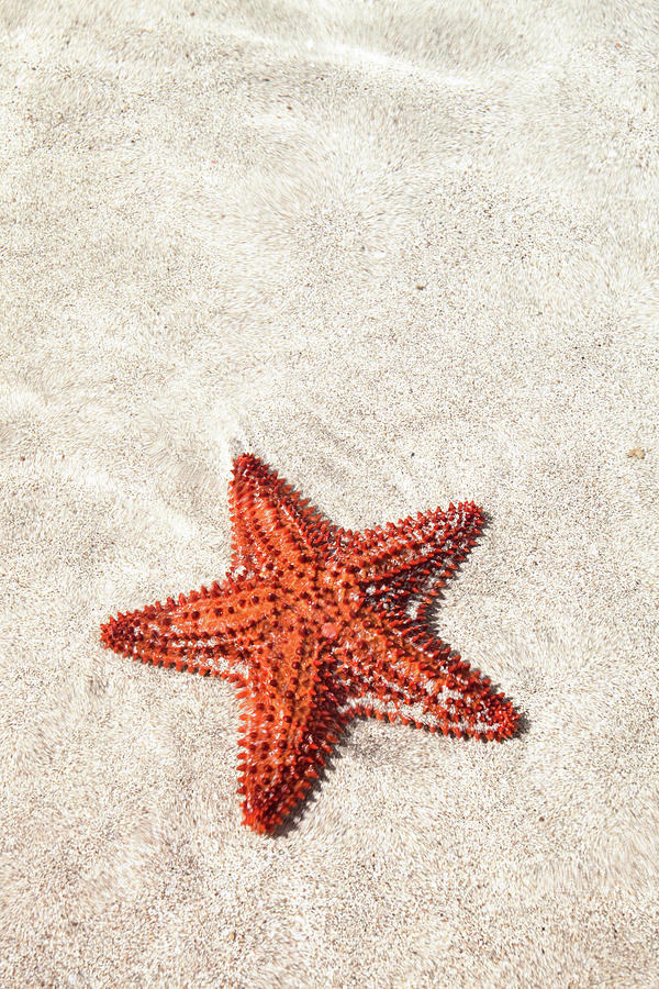 Vertical Photograph - Starfish Under Water by Matteo Colombo
