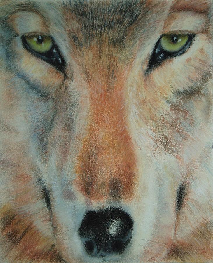 Wolf Pastel - Staring Contest by Joanna Gates
