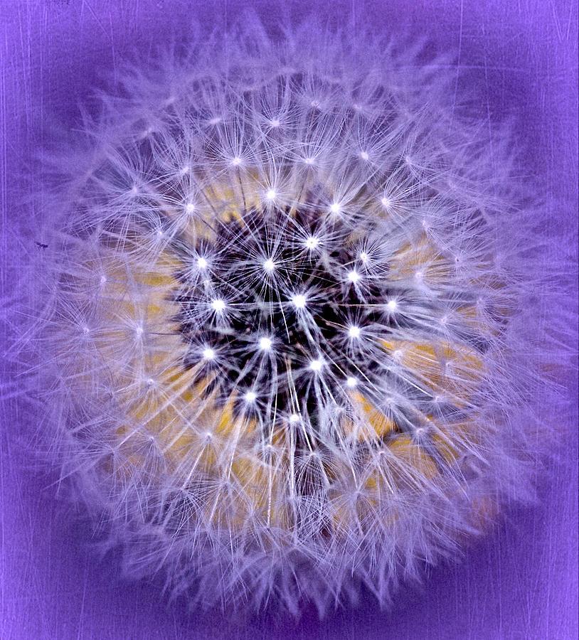 Dandelion Photograph - Starry Starry Night by Richard Cummings