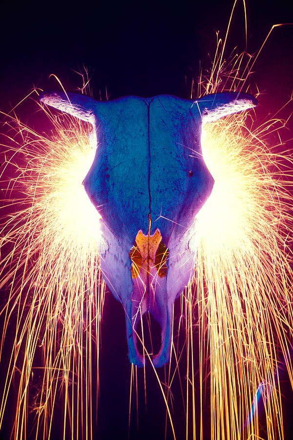 Cow Photograph - Steer Skull With Sparks  by Garry Gay