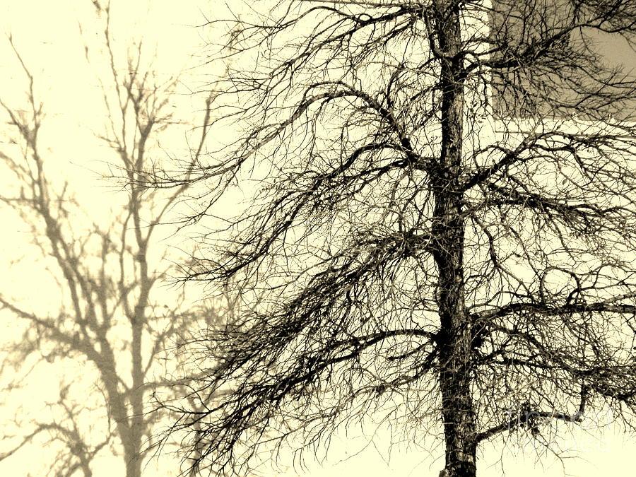 Tree Photograph - Steiglich Steichen And Pratt by Joe Jake Pratt