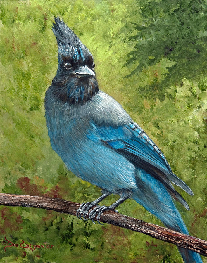 Stellar Jay Painting - Stellar Jay by Dee Carpenter