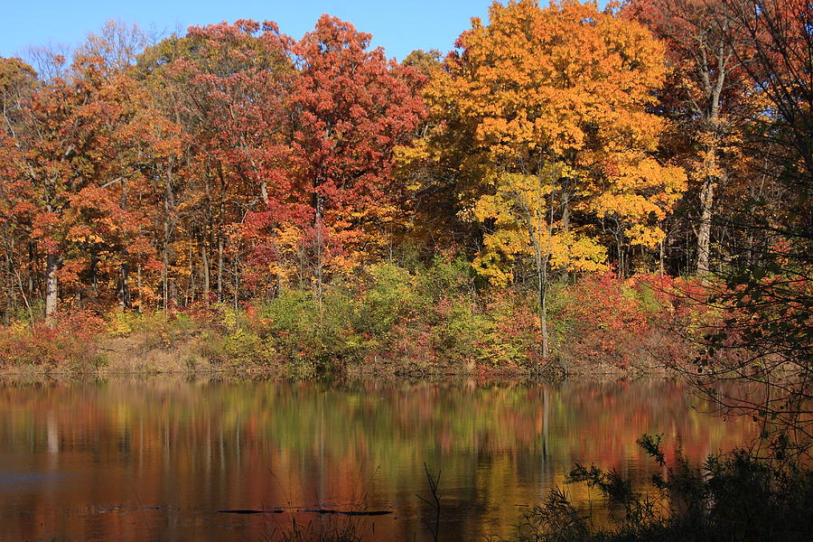 Trees Photograph - Sterling Pond by Lyle Hatch