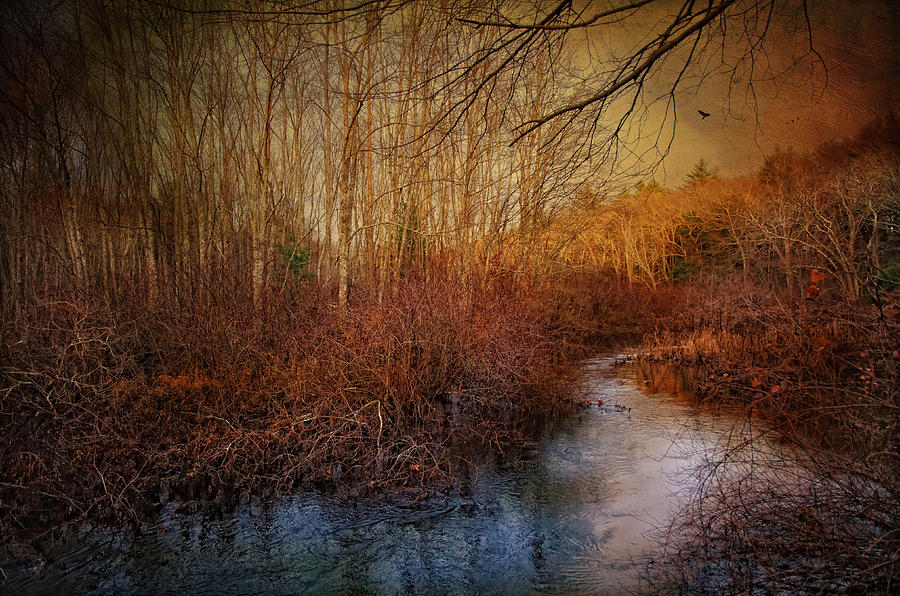 Water Brook Photograph - Still By The Stream by Robin-Lee Vieira