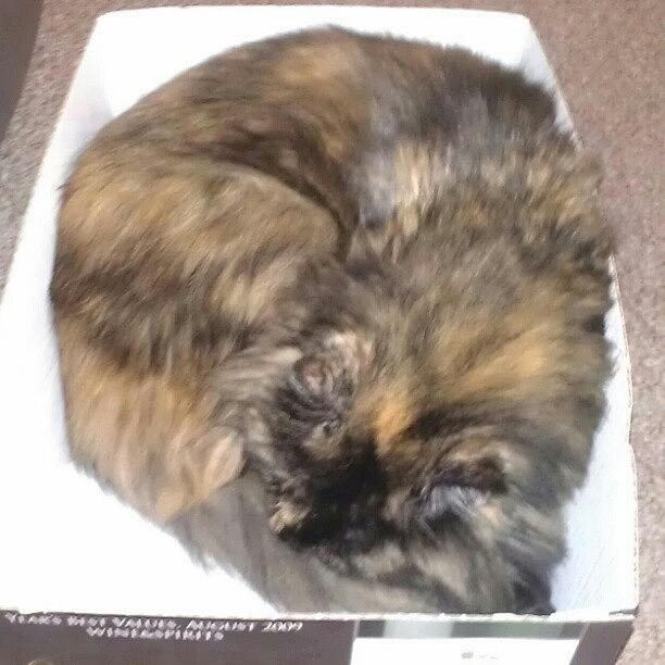 Beautiful Photograph - Still In The Box by Jinxi The House Cat
