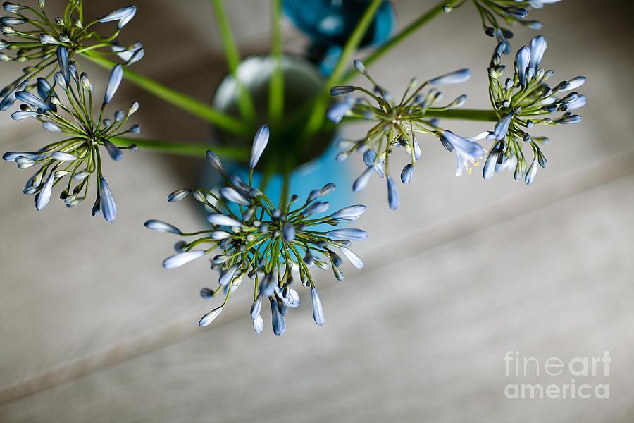 Still Photograph - Still Life 04 by Nailia Schwarz