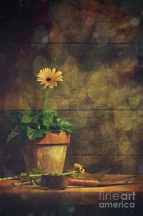 Atmosphere Photograph - Still Life Of Yellow Gerbera Daisy In Clay Pot by Sandra Cunningham