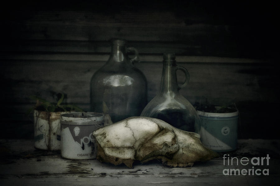 Bear Photograph - Still Life With Bear Skull by Priska Wettstein