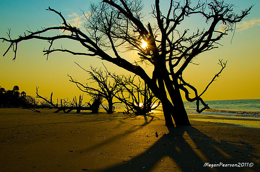 Botany Bay Photograph - Still Standing by Megan Pearson