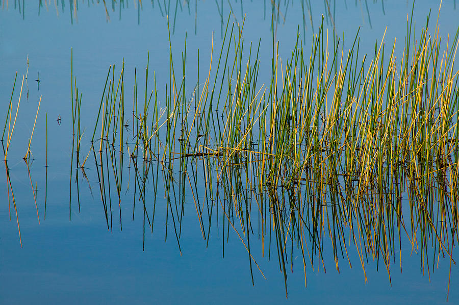 Reflections Photograph - Still Water And Grasses by Rich Franco
