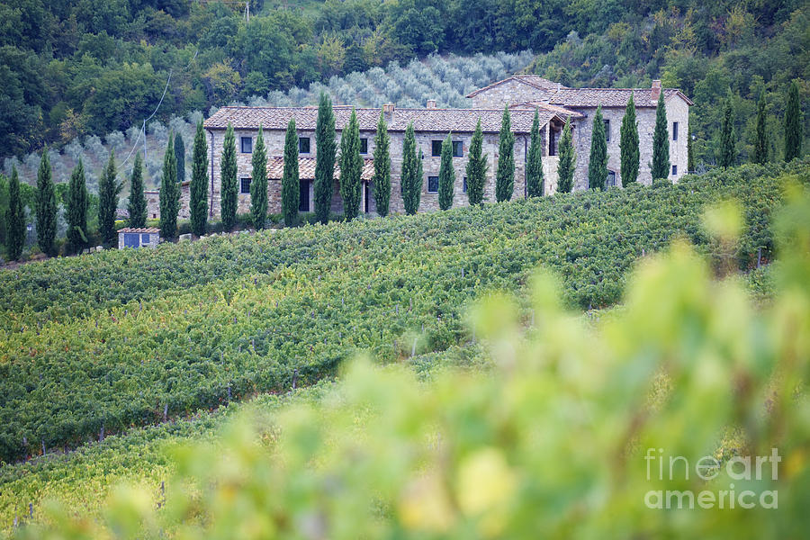 Agriculture Photograph - Stone Farmhouse And Vineyard by Jeremy Woodhouse