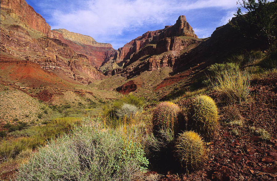 Stonecreek Canyon Photograph - Stonecreek Canyon In The Grand Canyon by David Edwards