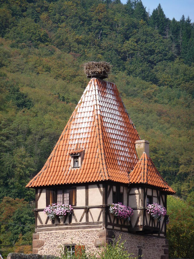 Alsace Photograph - Stork Nest In Alsace France by Christopher Mullard