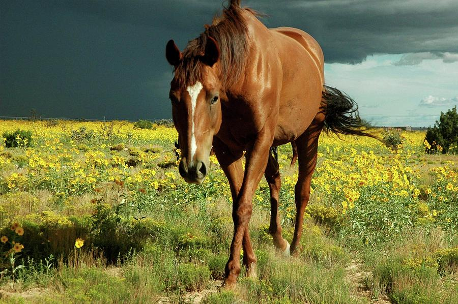 Horizontal Photograph - Storm Horse by photo © Jennifer Esperanza