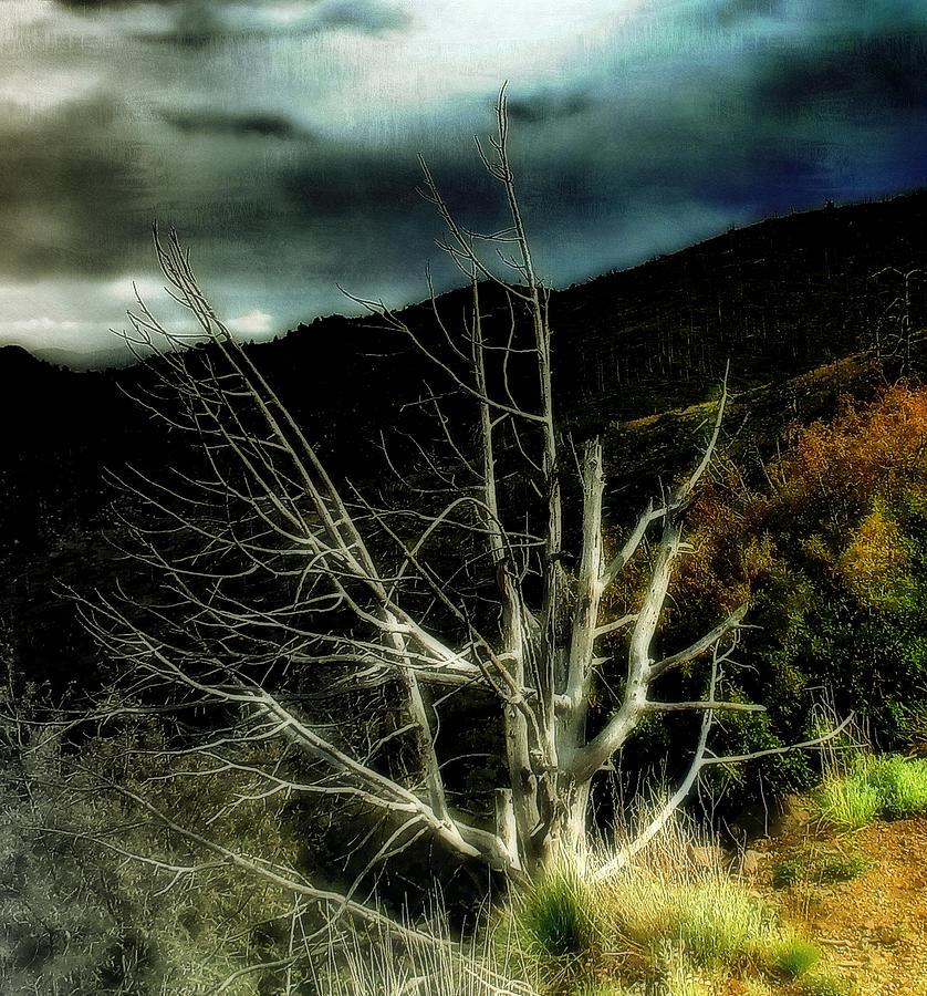 Dead Tree Photograph - Storm Over The Jemez Mountains by Ellen Heaverlo