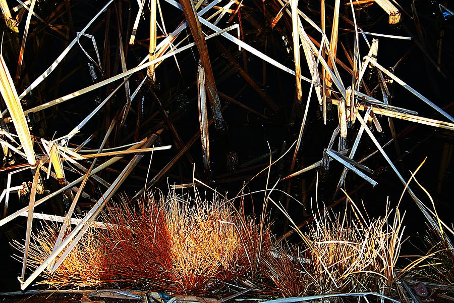 Natural Photograph - Straw by Susana Sanchez Giraud