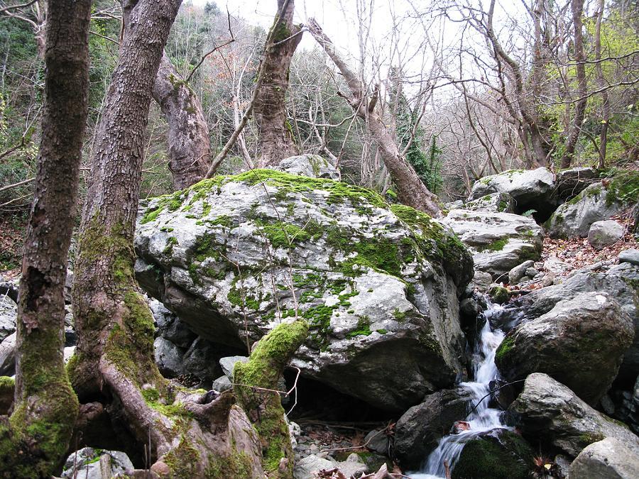 Skotina Springs Photograph