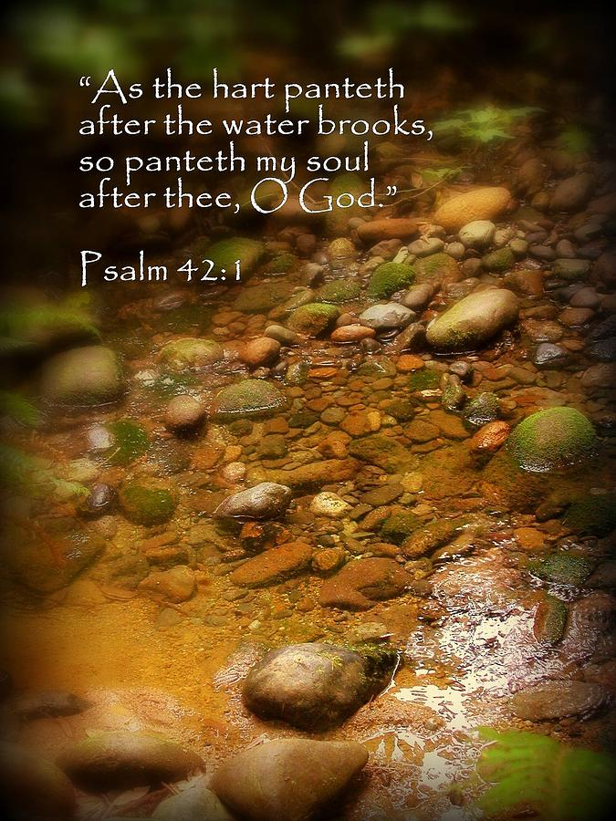 Cindy Photograph - Stream Bed Psalm 42 by Cindy Wright