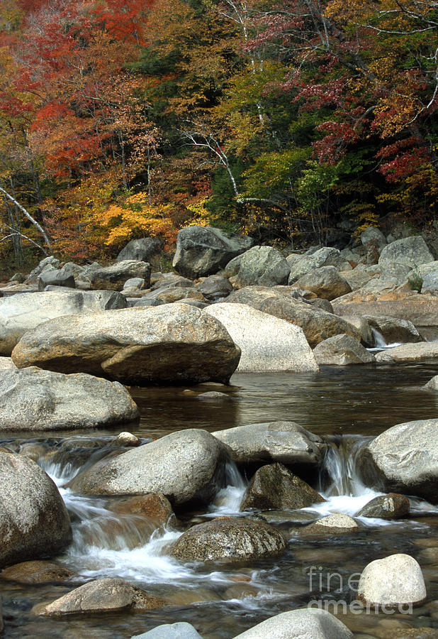 New Hampshire Photograph - Streamside Color by Sandra Bronstein