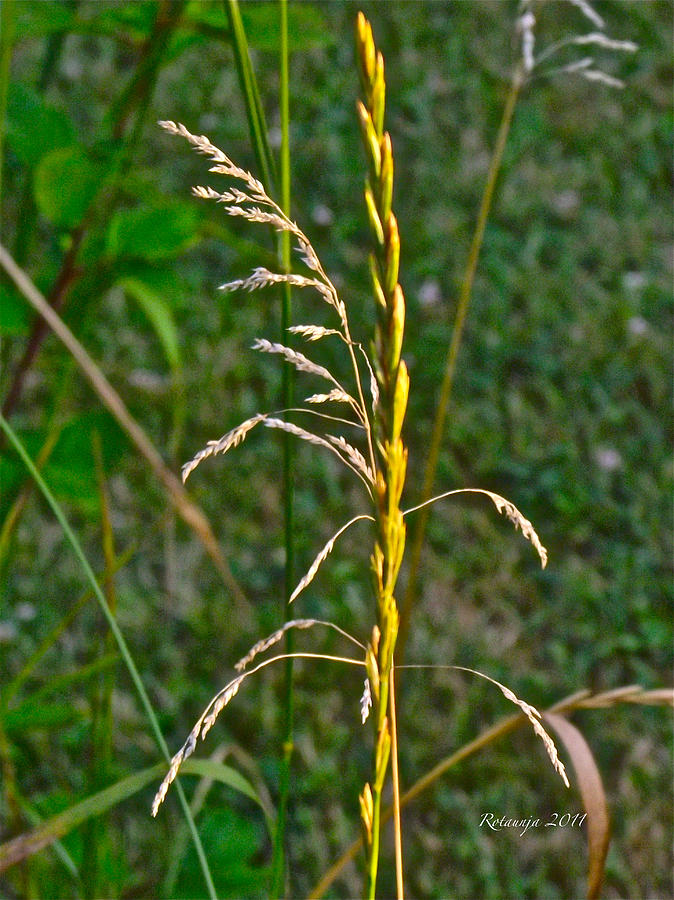 Weeds Photograph - Strength In Numbers by Rotaunja