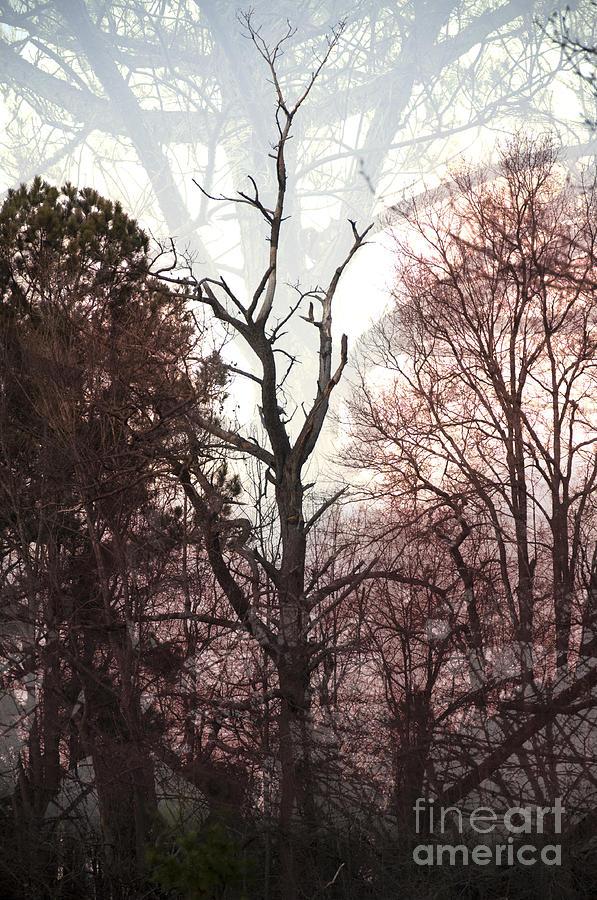 Landscape Photograph - Stretch by Affini Woodley