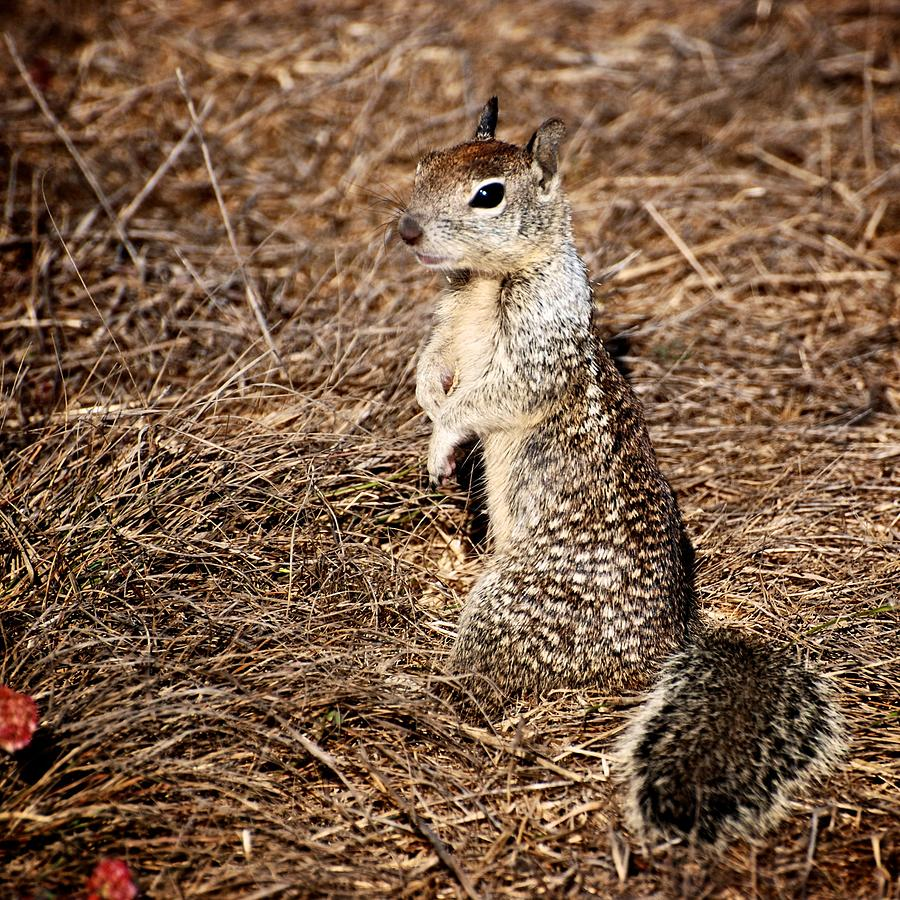 Squirrel Photograph - Strike A Squirrelly Pose by Eric Tressler