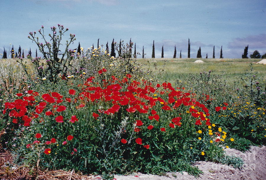 Red Flowers Photograph - Striking Spanish Scenery by Barbara Plattenburg