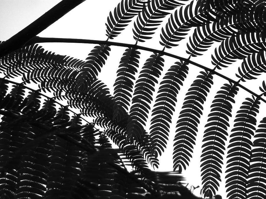Leaves Digital Art - Structures by Scott Miller