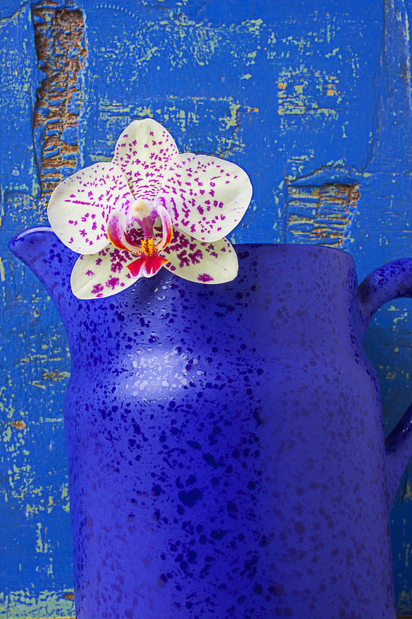 Gay Blue Orchid