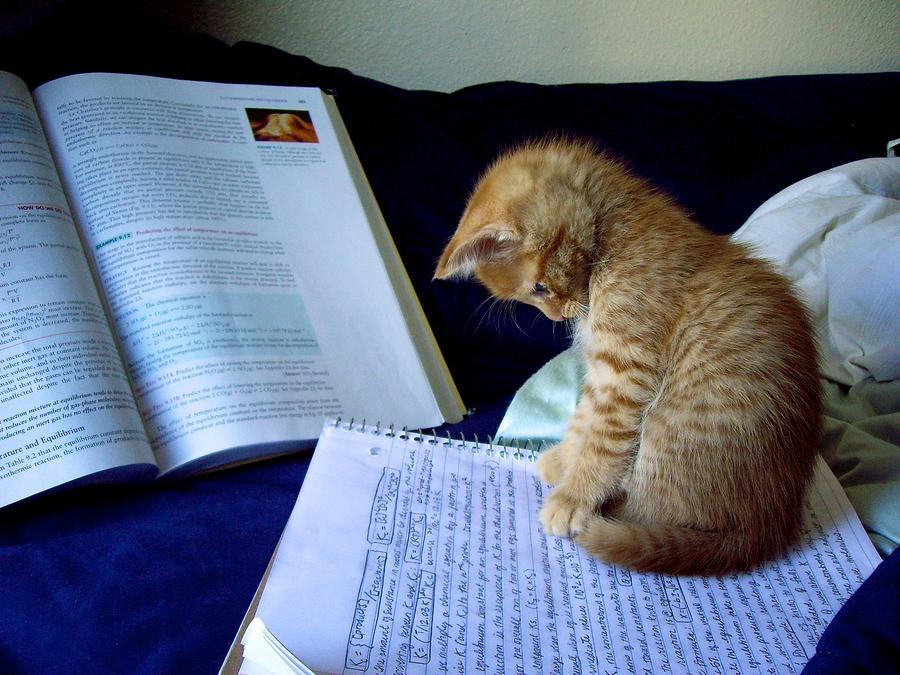 Cat Photograph - Study Time by KC Moffatt
