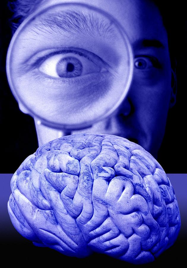 Brain Photograph - Studying The Brain, Conceptual Image by Victor De Schwanberg