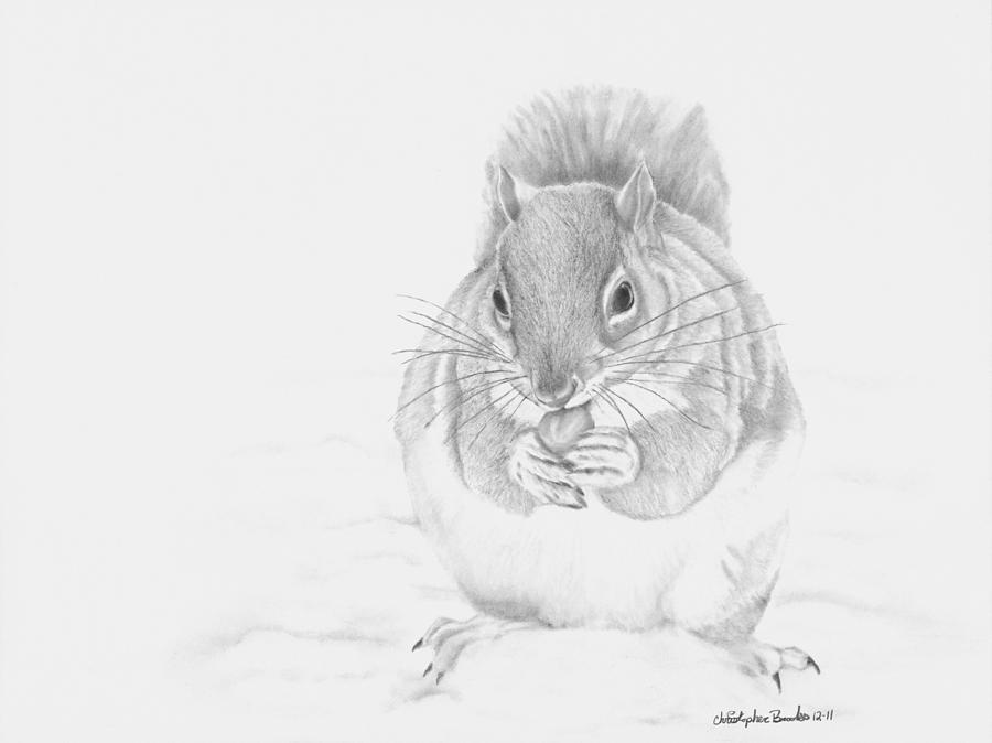 Animal Drawing - Stuffed by Christopher Brooks