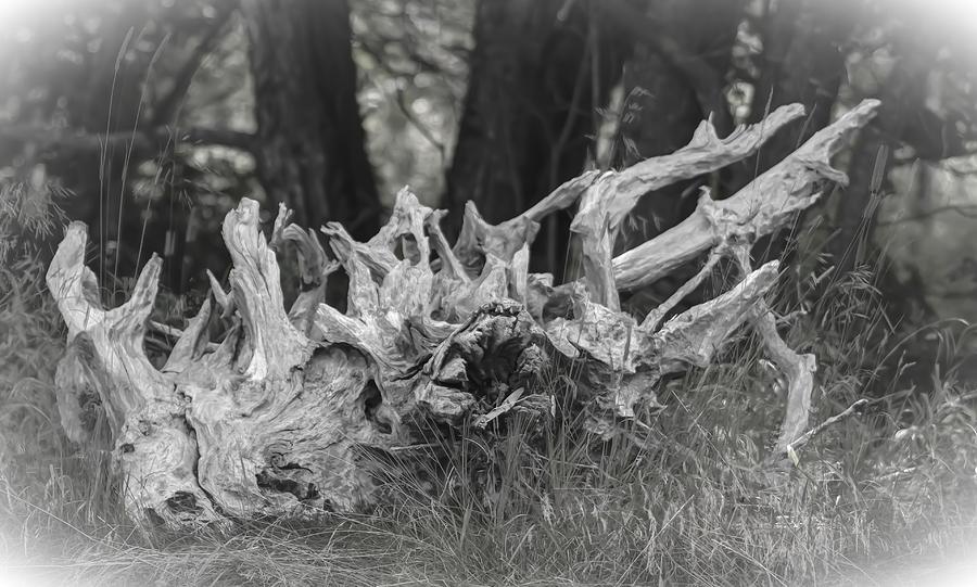 Nikon D300s Photograph - Stumped by Daniel Milligan
