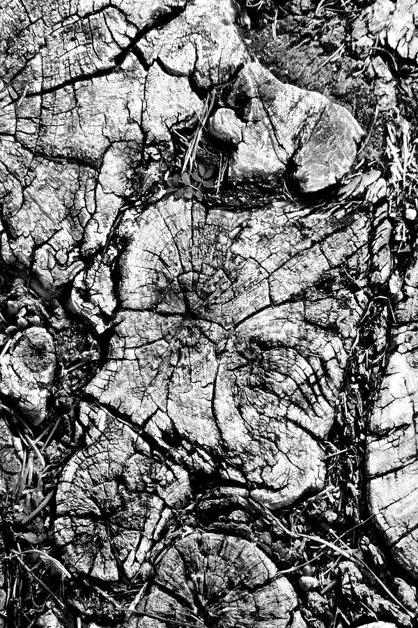 Tree Stump Photograph - Stumped by Mike McGlothlen
