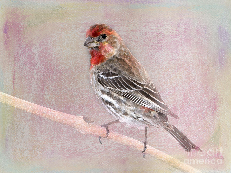 House Finch Photograph - Sublime by Betty LaRue