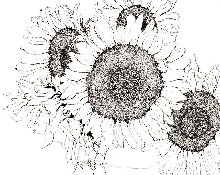 Suflower Boquet Drawing by Sara Bell
