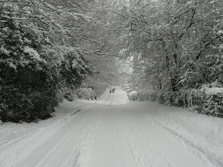Christmas Cards Photograph - Sugar Road IIi by Rdr Creative