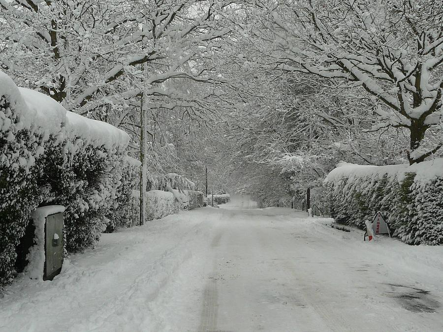 Christmas Cards Photograph - Sugar Road by Rdr Creative