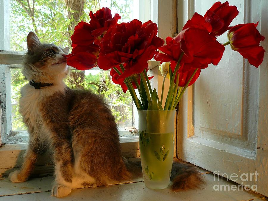 Summer - Cat 1 Pyrography by Alisa Tek