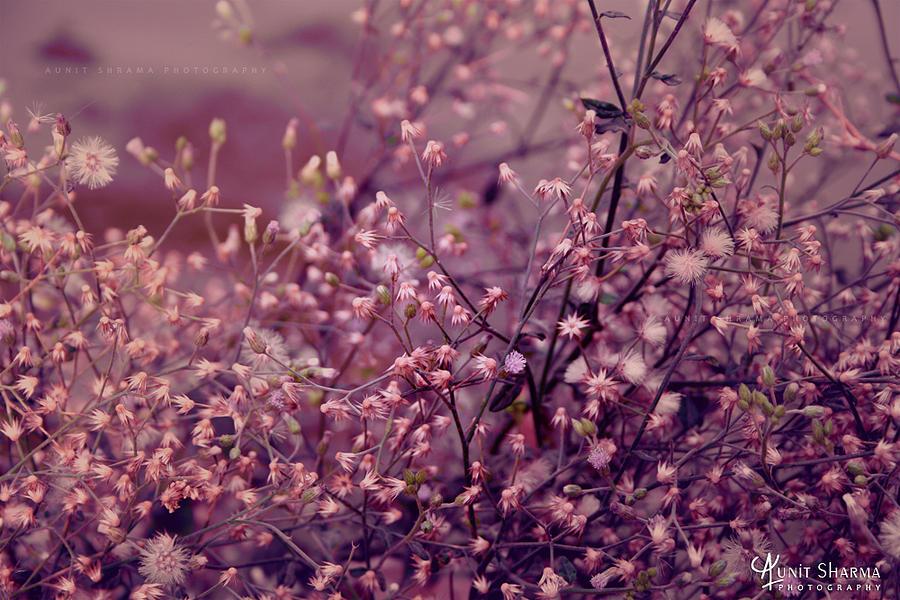 Green Photograph - Summer by Aunit Sharma