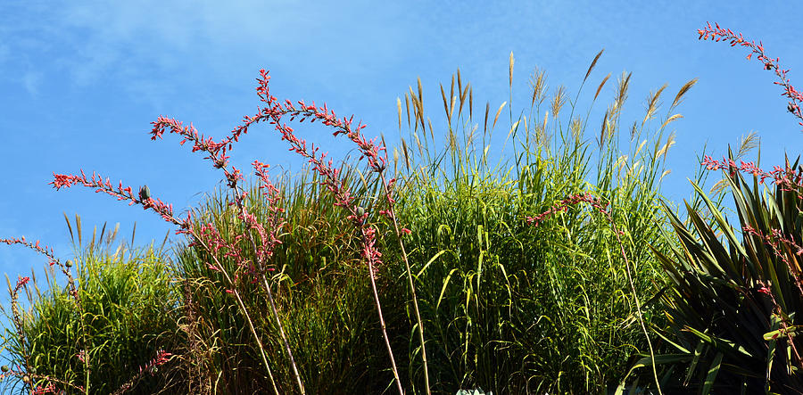 Foliage Photograph - Summer Daze by Fraida Gutovich