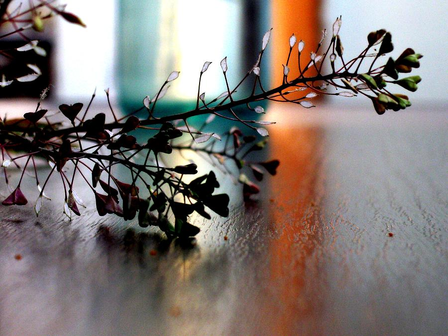Flower Photograph - Summer Dream by Ioana Geacar