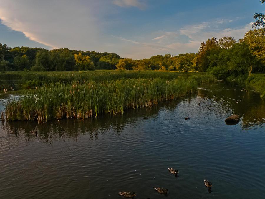 Nature Photograph - Summer Duck Pond by Jiayin Ma
