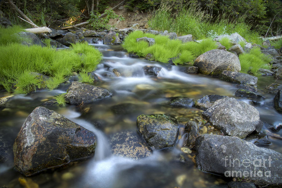 Summer Flow Photograph